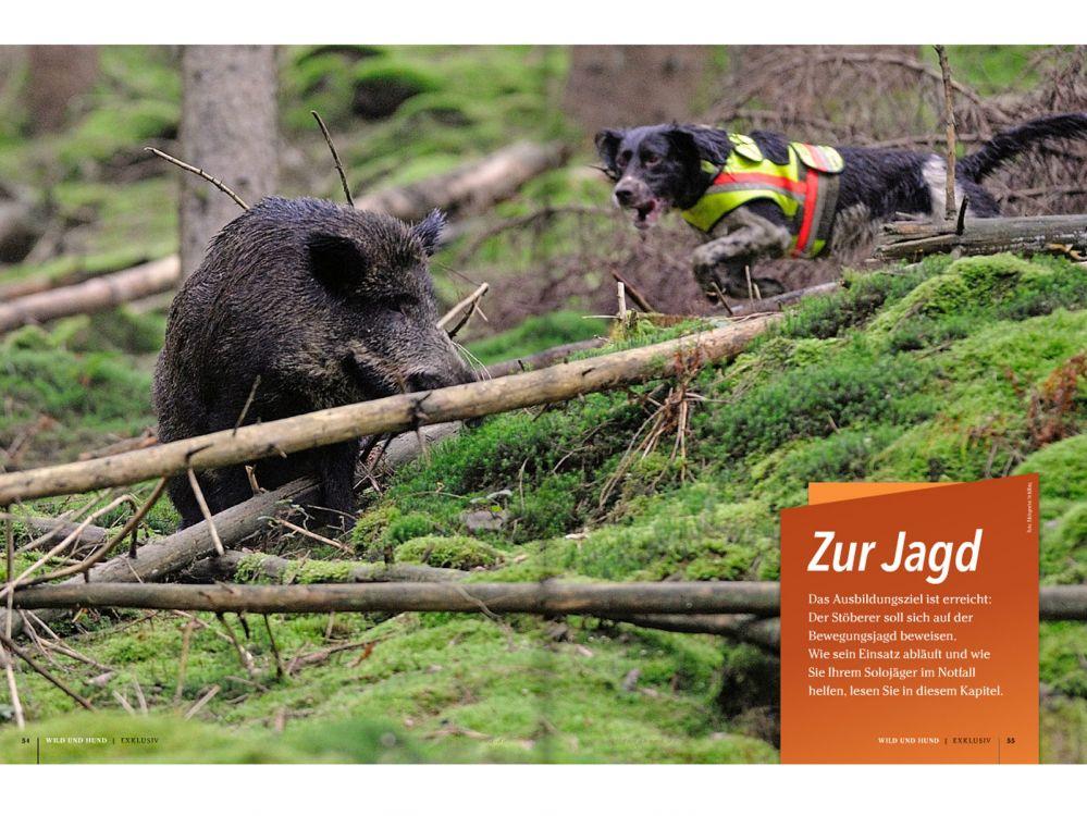 Besuch von Wild und Hund